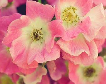 Floral Art Print - Flower Photography - Rose Photo - Pink Decor - Vintage Style - Botanical Art - Bedroom Wall Art - Cottage Chic - Pastel