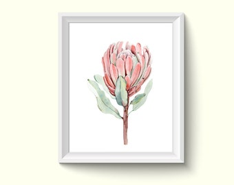 Protea Flower Watercolour Painting Drawing Art Print N42