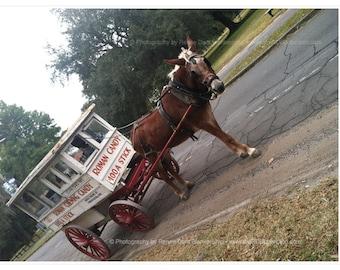 Roman Candy Cart Photograph - New Orleans