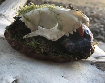 Real Skull and Gemstones with Moss