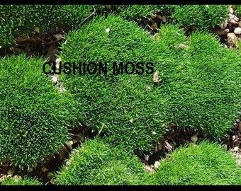 MOSS Fresh Live Cushion / Pillow Moss Organic