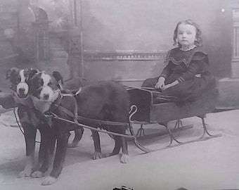 Cute Girl Curly Hair Border Collies Dogs Harness Sled Glass Photo Negative 1890-1920 5x7 #598