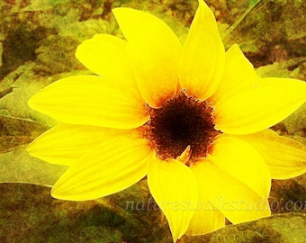 Golden Sunflower Altered Photograph Bright Summer Garden Abstract Digital Painting