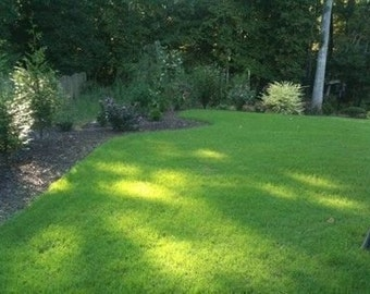 Bermuda Grass Seed Common Hulled