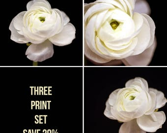 Flower Photography, Nature Print, White Wall Art, Ranunculus Photograph - Minimalist Home Decor, Floral Print Set, Save 20%, Art for Walls