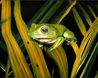 On Golden fronds Print, Pastel Painting Print, Australian Green Tree frog A4 Print,  A0004, Green Tree Frog Print