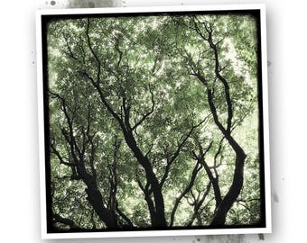 In the leaves - Brocéliande - art photo signed 20 x 20 cm