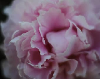 Light Pink, Romantic Walk, Calming, Floral Print, Chic Decor, Peony Flower, Bloom