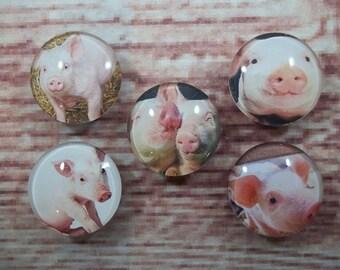 Cute Pig Fridge Magnets, Glass Kitchen Magnets, Set of 5, Kitchen Decor, Hostess Gift, Housewarming Gift, Office Decor, Locker Magnet
