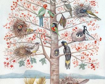 Treehouse - Illawarra Flame Tree and Twelve Australian Native Birds