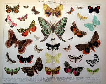 Ancient INSECTS print, BUTTERFLIES and MOTHS chromolithograph , 1896 papillons engraving, vintage  lepidopterans  butterfly zoology.