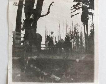 Original Antique Photograph | Forest Ride