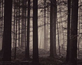 the forests of #147