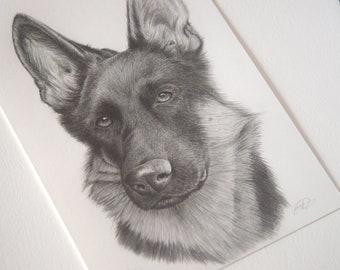 Custom Pet Portrait, Graphite pencil drawing, original art work, pen sketch, illustration, animal sketch, colour or black and white
