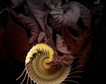 Fine Art Print - Mandala from nature - Revocation Partus 1