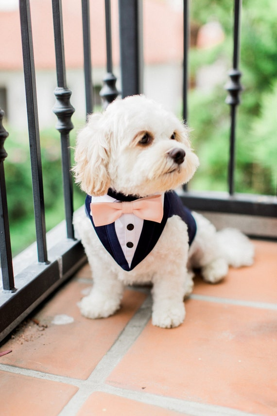 Blue Formal Dog Tuxedo Wedding Tuxedo For Dogs Custom Made