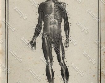Antique Original Engraving  Human physiology Internal Organs -   Human Anatomy -  Human Face - Head - Nose - f