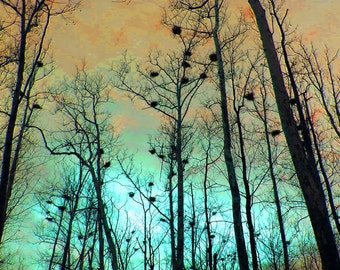 Heron Heights 5x7 Woodland Print Fine Art Photography