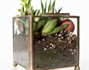 SOLD. Made To Order. Geometric Glass Planter, Succulent Planter, Miniature Succulent Garden, Succulent Decor
