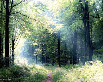 Canvas print, West Woods in summer, ray of light, magical, wall art, landscape, donation to Wiltshire Wildlife Trust, wonderful gift