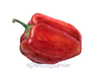 Hand painted watercolour Bell pepper / Digital clipart for instant download with transparent background.