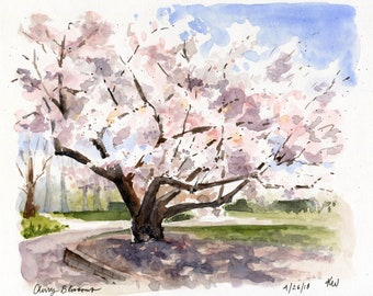 8x10 - Cherry Blossoms - Original Watercolor Painting