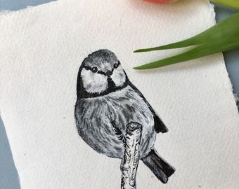 Blue Tit, Original Ink Drawing