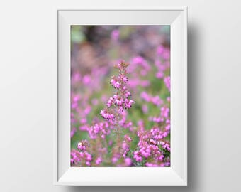 Pink Floral Photograph, flower photography, Floral print, Floral wall art, Spring floral, Spring photograph, Pink flower photo, Nature photo
