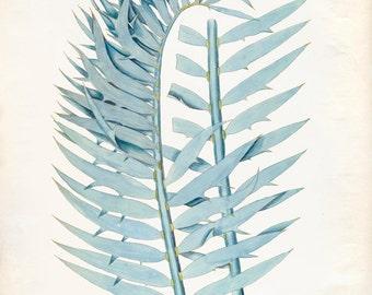 Vintage Zamia Plant Print 8x10 P222