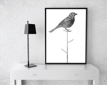 Fairouz song (bird)