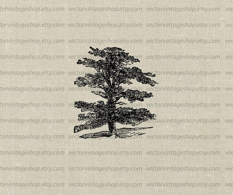 Cedar vector clipart instant download evergreen cedar of zoom sciox Image collections