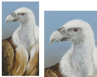 Buzzard painting - vulture painting - realistic traditional wildlife art, ready to hang frameless - scavenger buzzard art
