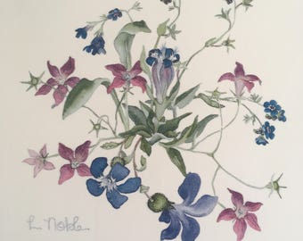 Botanical Print. Lyn Noble Print. Alpine flowers. Watercolour.