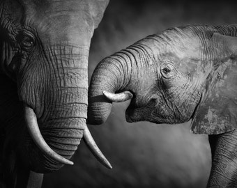 Elephant Family Love Picture Print on Acrylic or Canvas  Photo Home Wall Decor