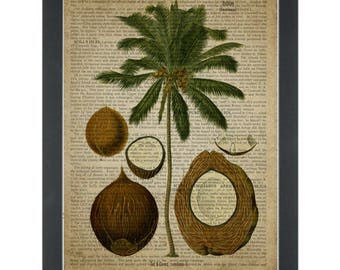 Vintage botanical drawing Coconuts and Tree