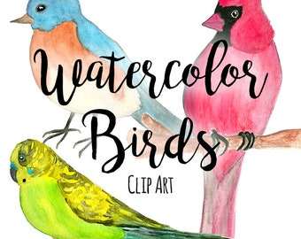 Hand Painted Watercolor Birds ClipArt PNG, INSTANT DOWNLOAD, Watercolor Parakeet Clipart, Bluebird Clipart, Red Cardinals Clipart, Pet Shop