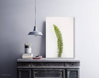 Green Fern Print, Fern Wall Art, Fern Art, Fern Photograph, Botanical Print