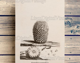 Cactus print, Wall art vintage, Floral wall art, Cactus art, Antique wall art, Digital prints, Printable poster, Botanicals, JPG PNG 300dpi
