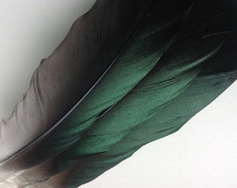 "Unique Green Feathers - Green Goose Feathers -Stunning Craft Feathers -  8"" inches - 15118"