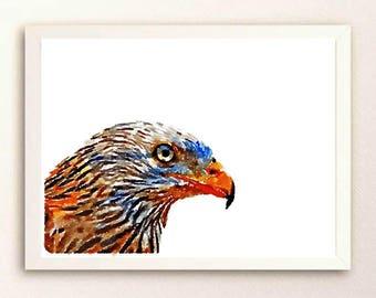 Red kite watercolor image, birdlovers wall art, bird photography, bird of prey poster