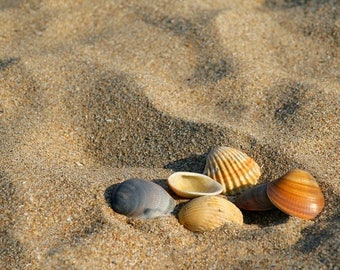 Set of laminated table sand and shells