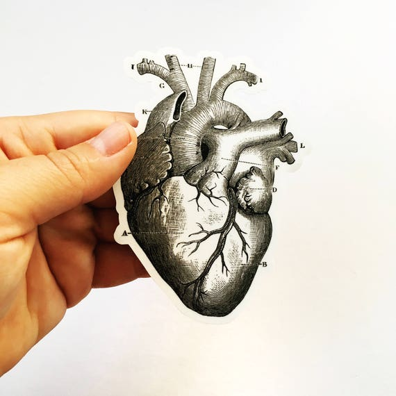 Heart Anatomy Sticker Grays Anatomy Vintage Halloween Vinyl