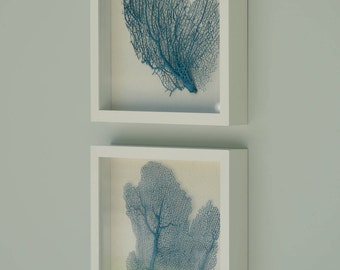 Pair of Large Sea Fans in Shadow Boxes, Teal