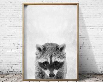 Raccoon Print - Woodlands Print - Raccoo Wall Art - RaccoonPoster - Raccoon Art - Raccoon Animal Prints