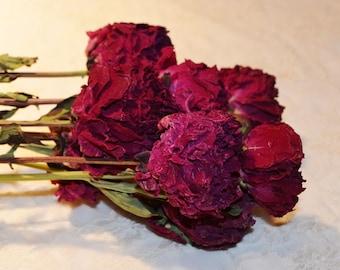 Peonies, burgundy peonies, dried peonies, peony bunch, dried flowers