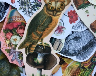 Owl disguise #2 surreal collage art handmade paper sticker