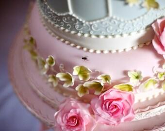 Cake Fly