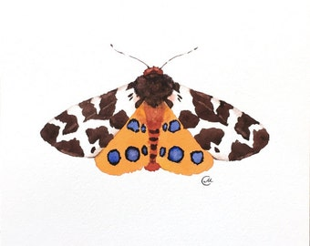 Tiger Moth - Original Watercolor Butterfly Painting 7 4/5 x 7 4/5 inches Insects