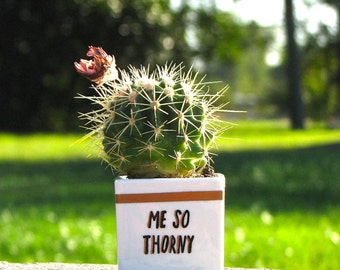 Me So Thorny // Adorable Succulent Pot // Puns & Succulents // Personalized Gifts // Cactus Puns // Birthday Gifts // Anniversary Gifts