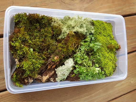 Bioactive Microfauna 1 Gallon Bag With Moss Lichens plants Along with Tropical & Temperate 8 oz Springtails Terrarium Vivarium Enclosure